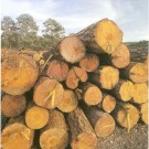 sawmill_Wood_timber